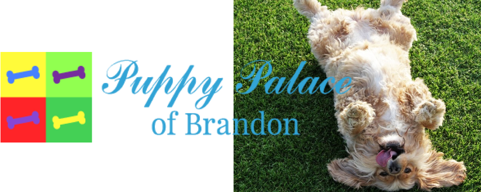 Brandon Puppy Palace