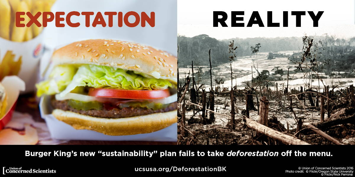 An image showing the impact of a burger on deforestation