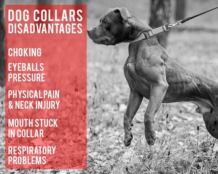 no pull dog harness australia