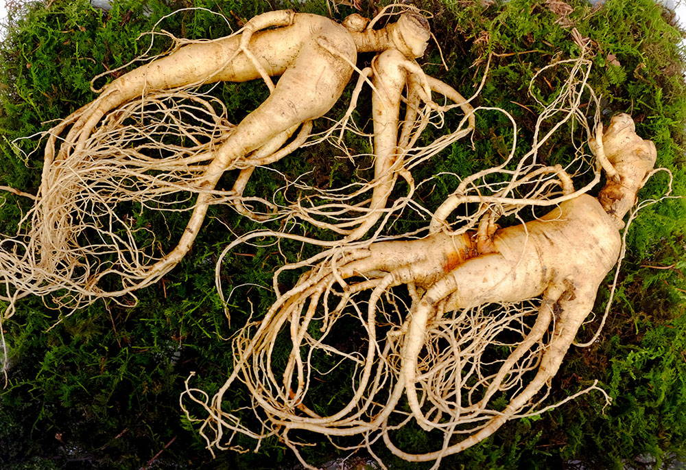 Ginseng - Relief For Menopause Mood Swings