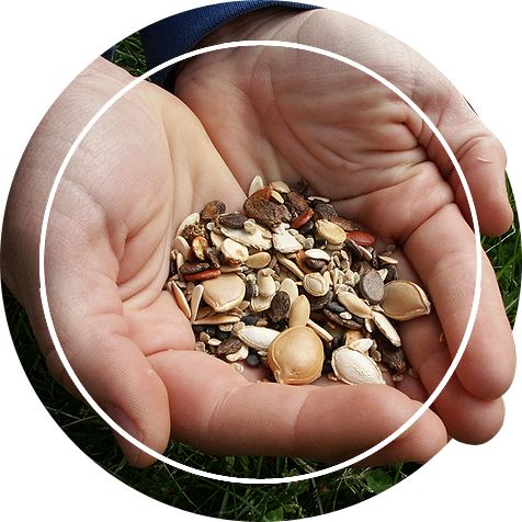 Hand holding bunch of seeds