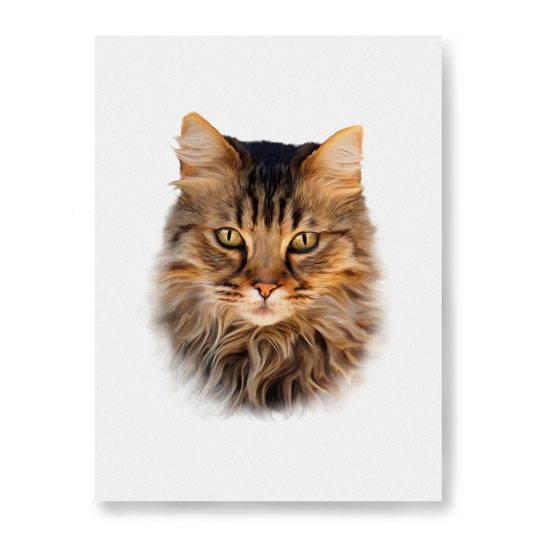 cat portrait - colors