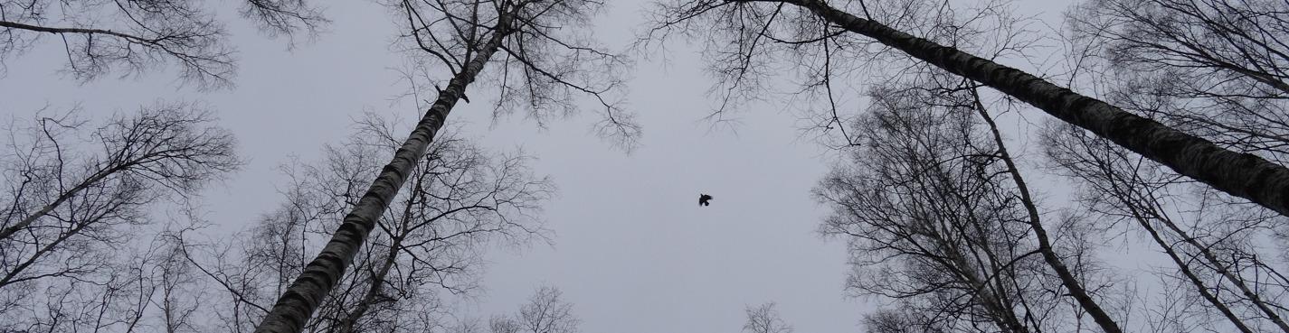 Birdwatching для начинающих: зимующие птицы Санкт-Петербурга.