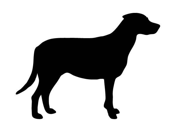 Abbildung: übergewichtiger Hund