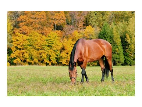 Pack of 6 Horseback Riding Lessons - Lazy Susan Farm in Fairview