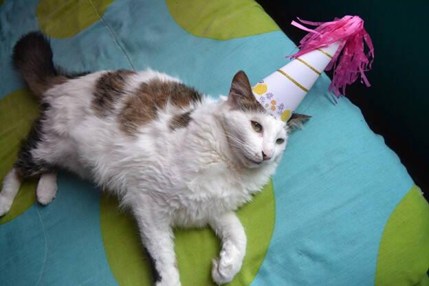 Cat in a birthday hat