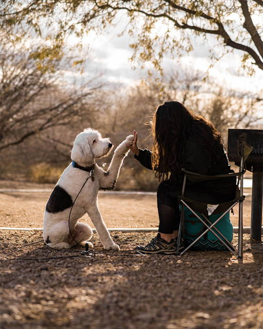 dog and owner on a camping trip with gravity stake