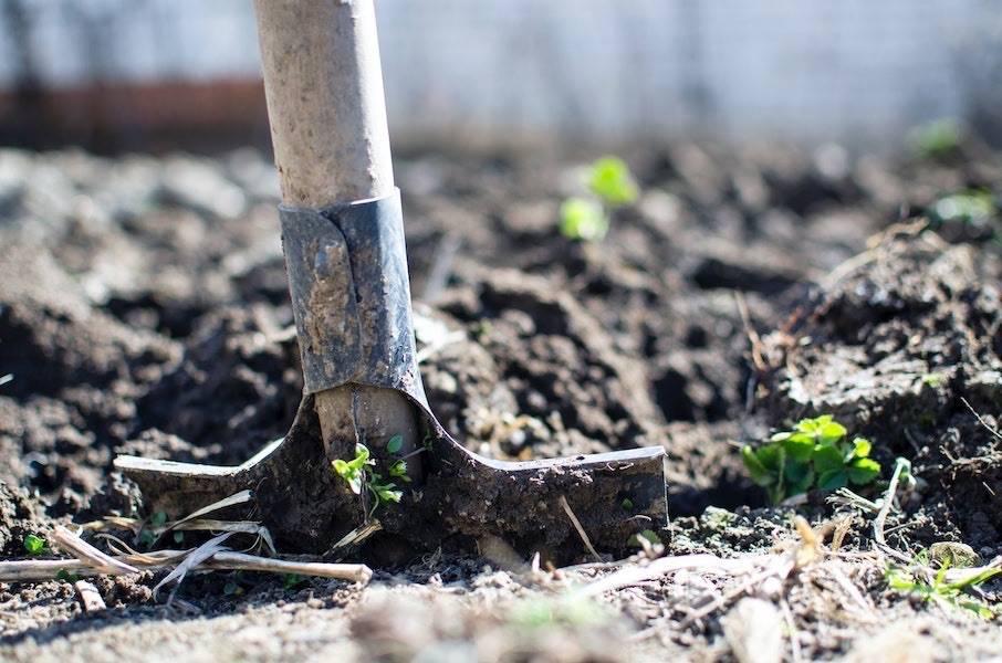 Spade dug into moist soil portraying the type of limestone soil used to grow grow Smooth Chardonnay.
