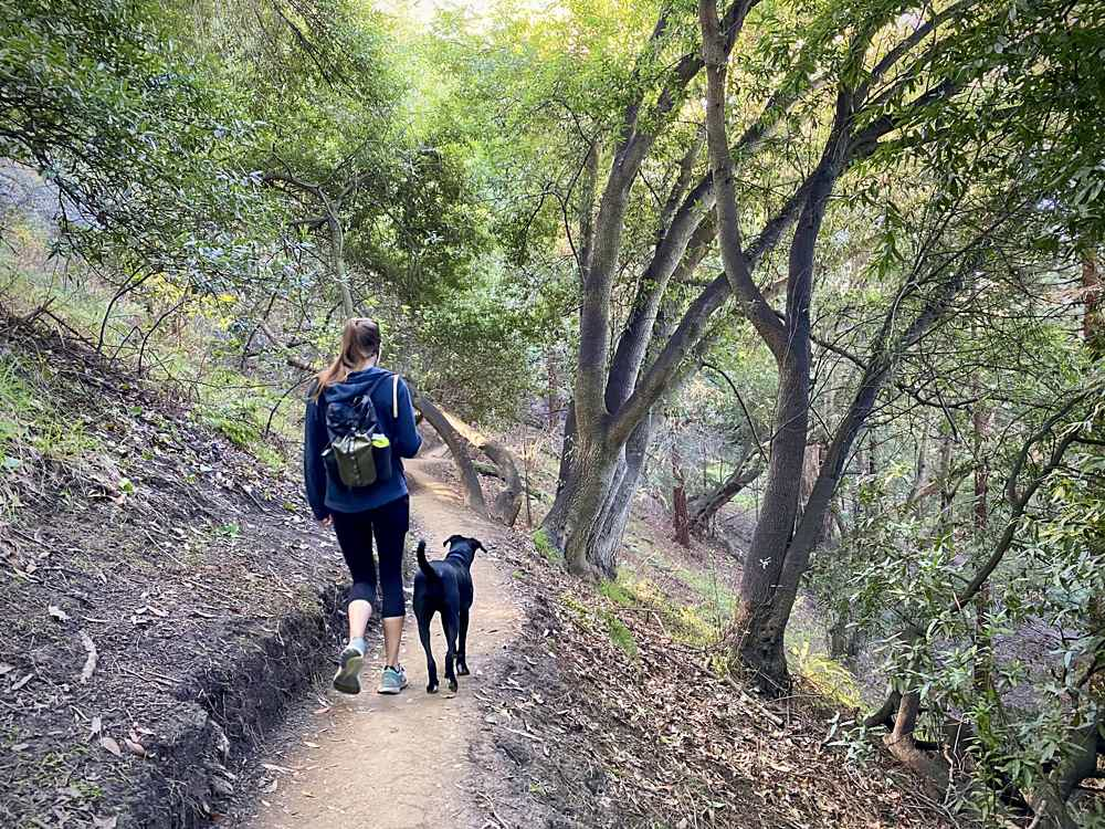 Woman walking her dog through a forest at Claremont Canyon in the East Bay
