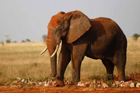 5 Days Amboseli, Tsavo West and East National Park