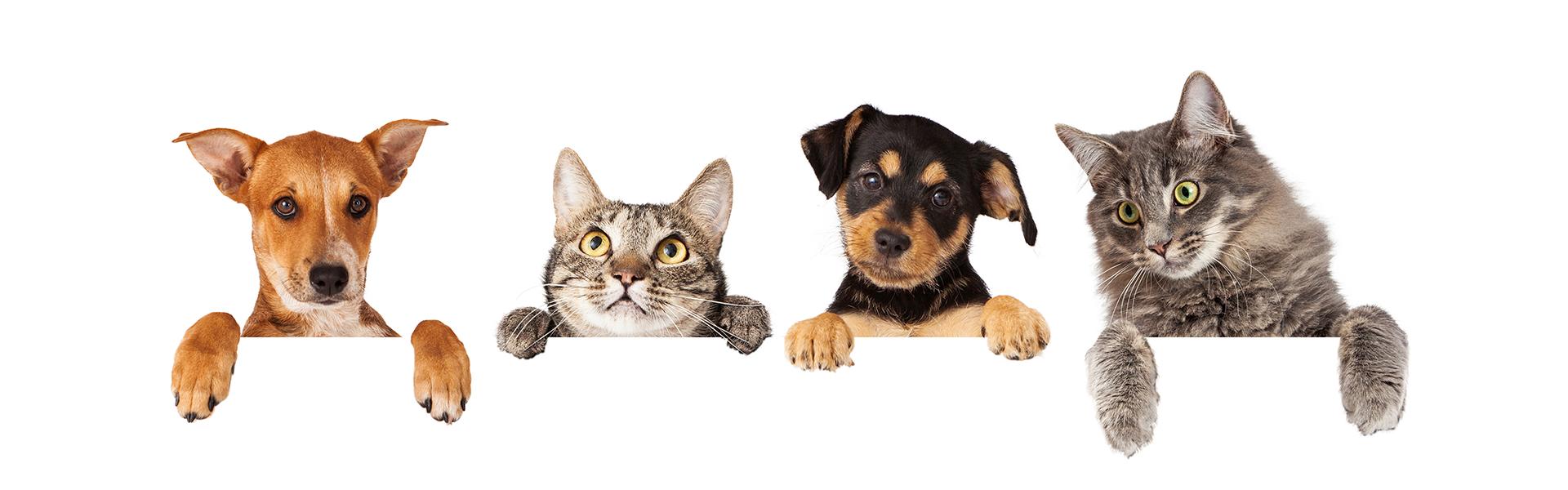 Pets Veterinarian Academy Animal Hospital Greenwood Indianapolis Indiana