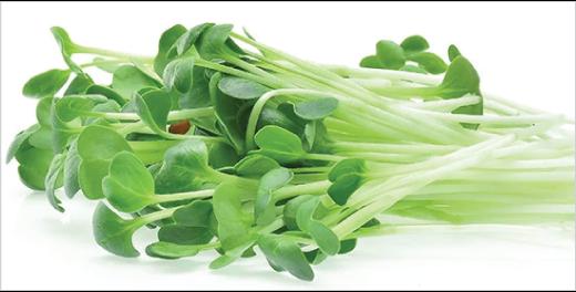 Alfalfa Microgreens