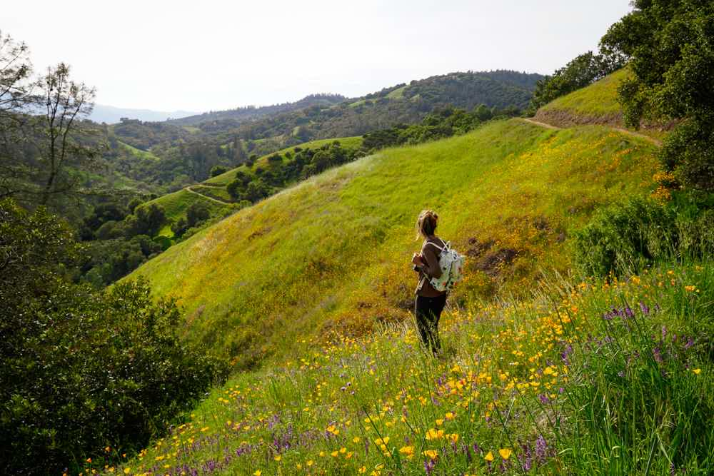 Woman hiking on the Valentine Vista Loop trail in Moore Creek Napa where California poppy is on the hillsides