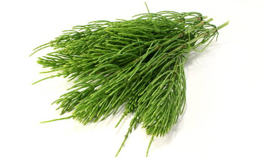 Horsetail Extract A perennial plant from the horsetail family. It grows in fields and gardens
