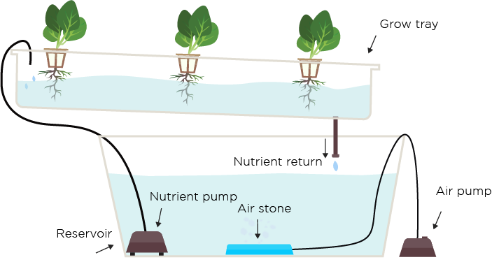 Using a Hydroponic System vs Growing with Soil