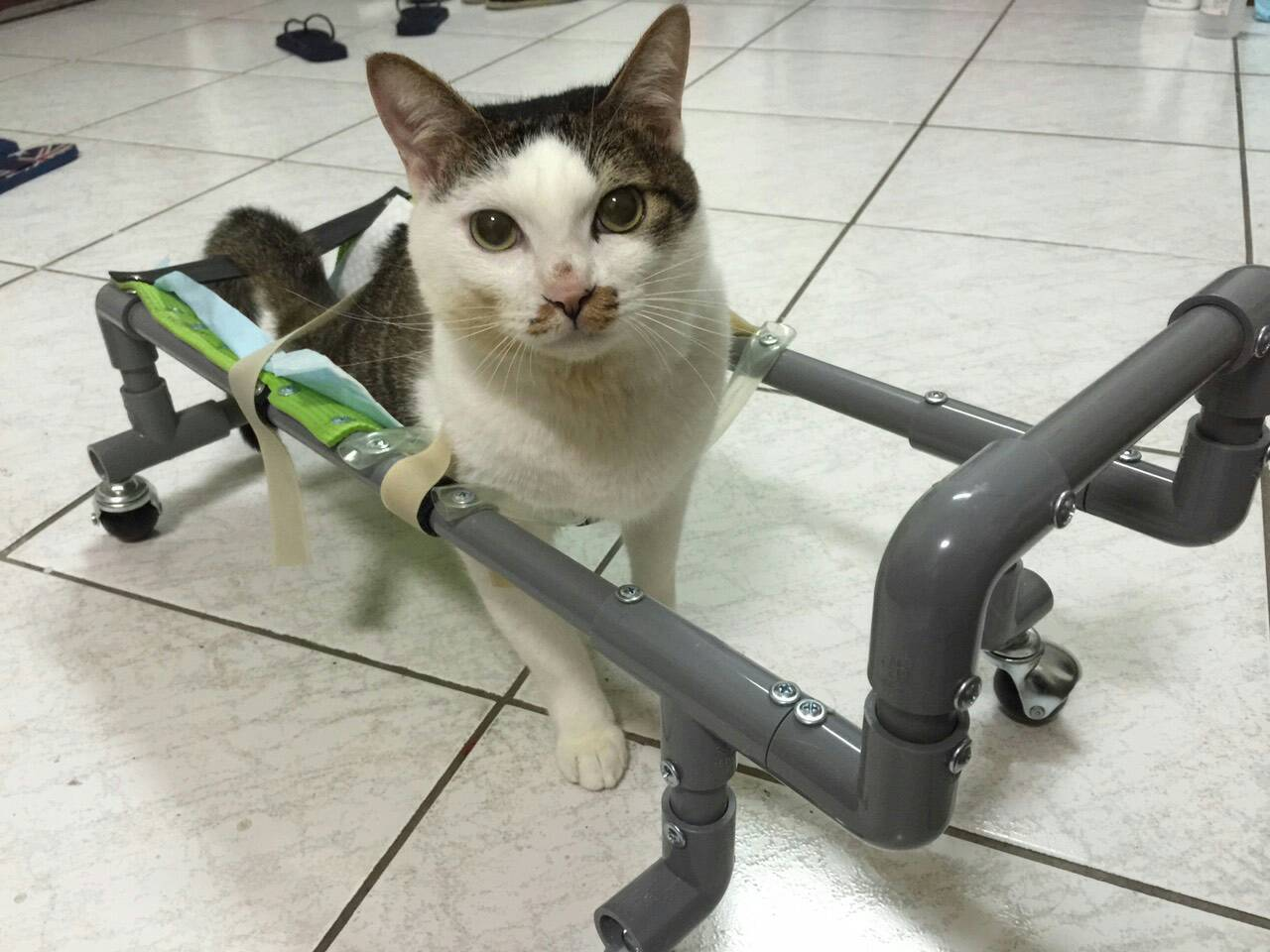 A picture of ZaiZai and his wheelchair