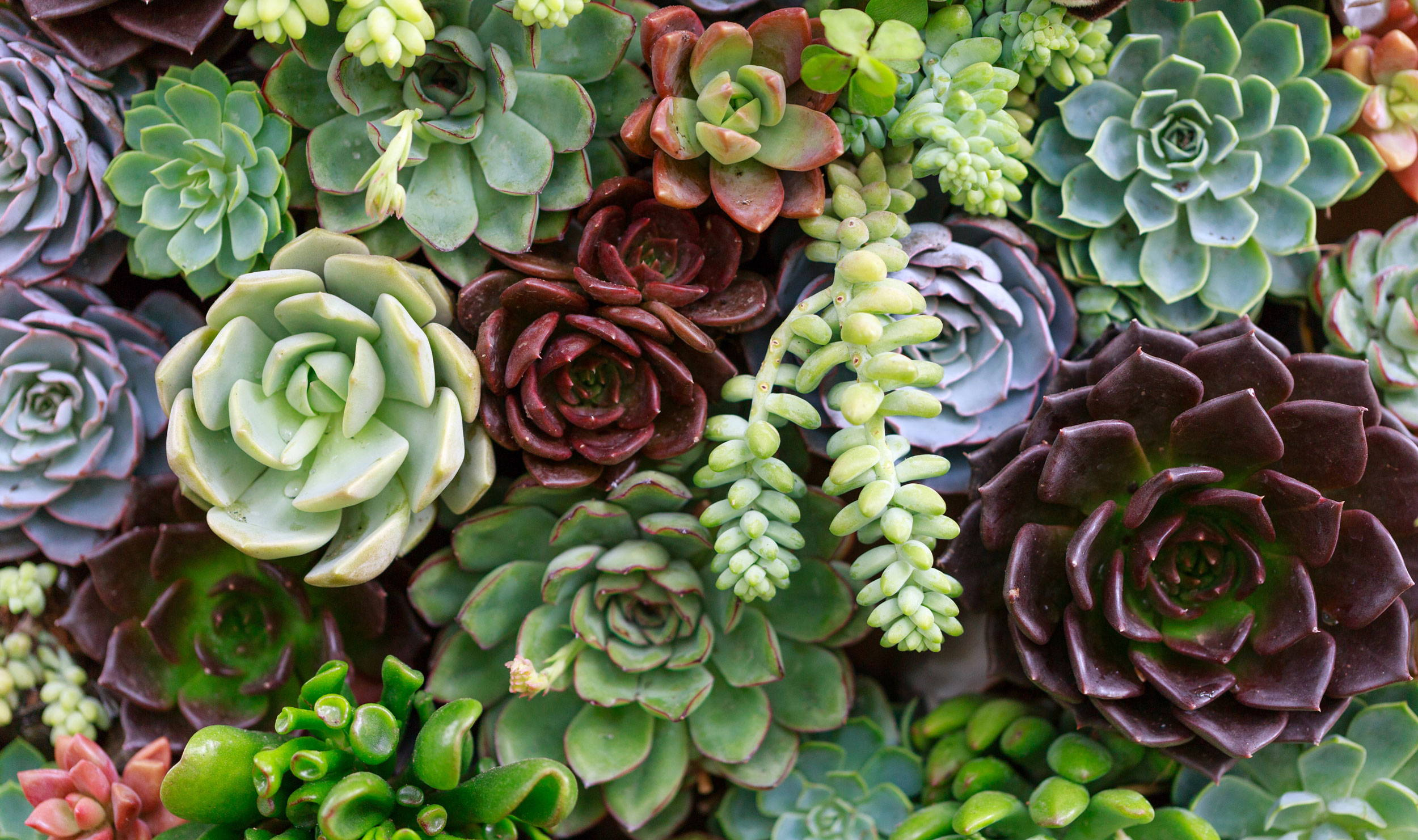 Different types of Succulents