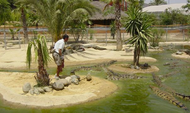 Поcещение крокодиловой фермы, парка бабочек и аквапарка