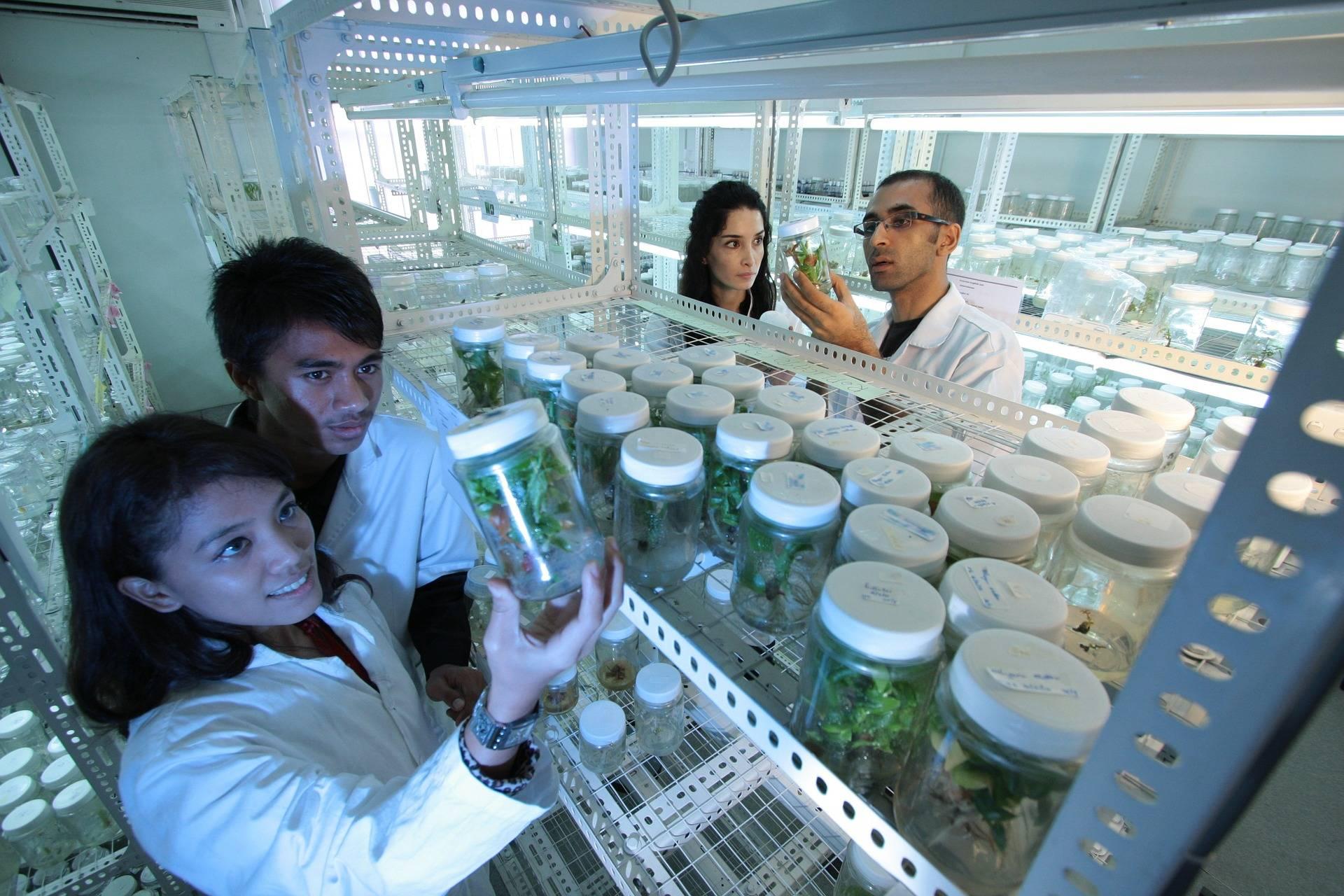 Peoples looking at jars