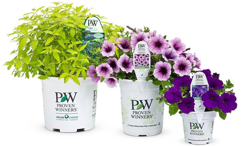 proven winners shrubs