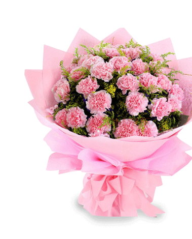 HF Perfect Pink Carnations