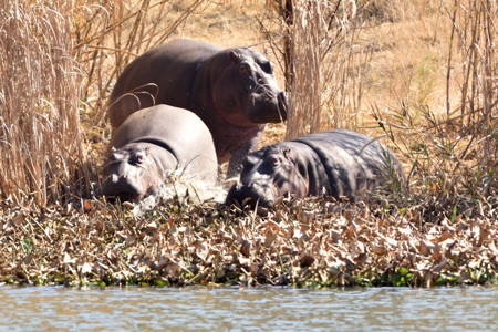 Photographic Nature walk with Wildlife and the resident Hippo family