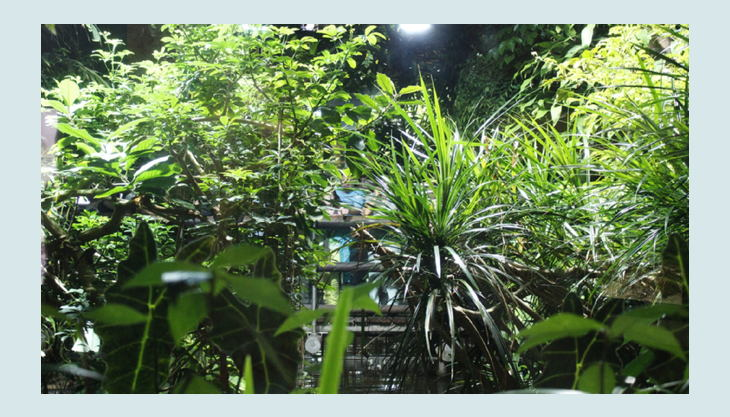 zoologischer garten berlin grüne natur