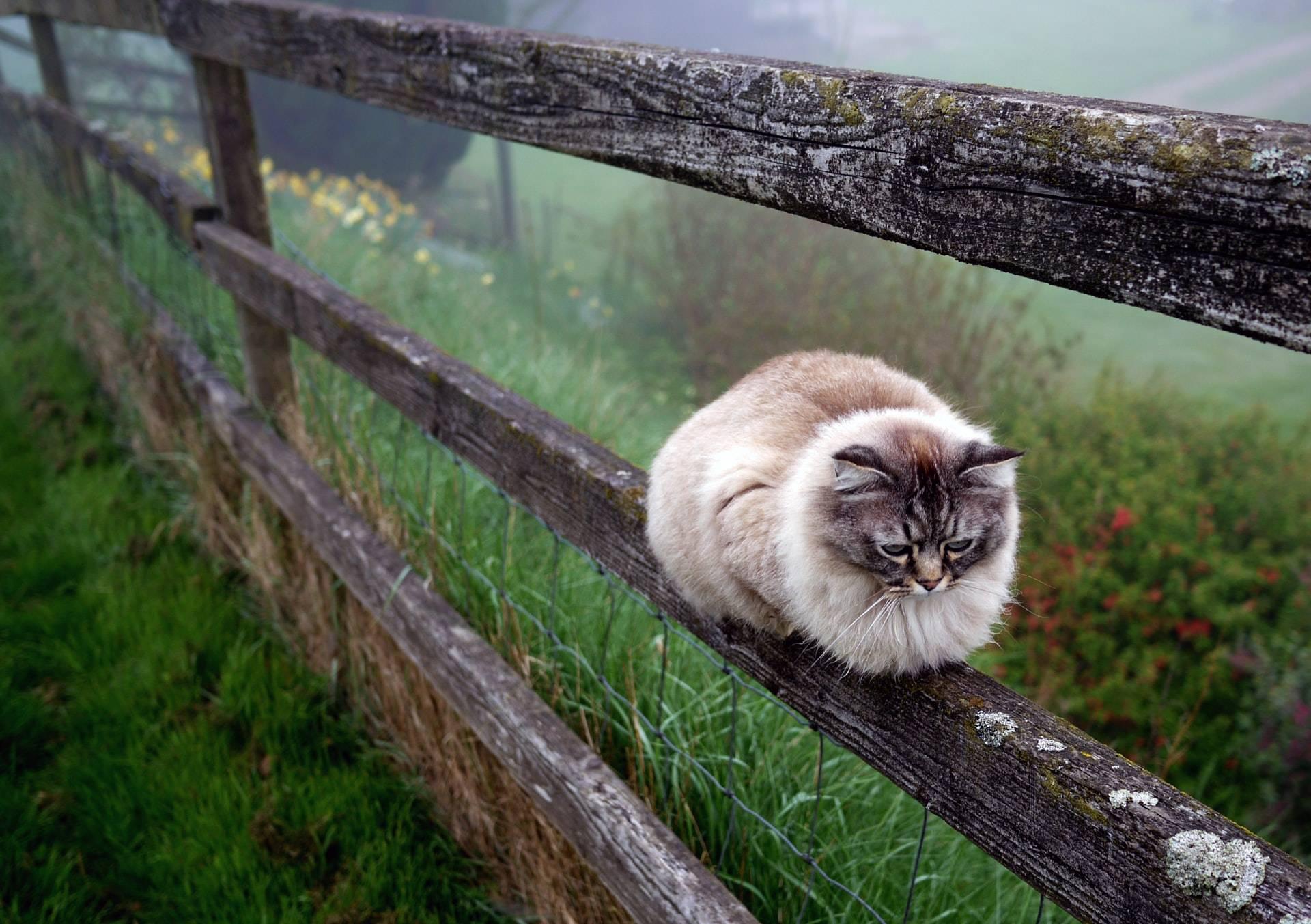 Simons cat, cat got lost, indoor vs outdoor - what is best for your cat