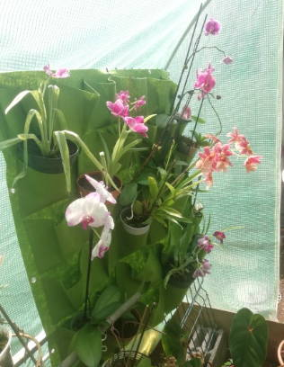 4 pockets-flower-plantation-suspended-bags-garden-wall-plants-green-basket-gardenwall-testimonial-4