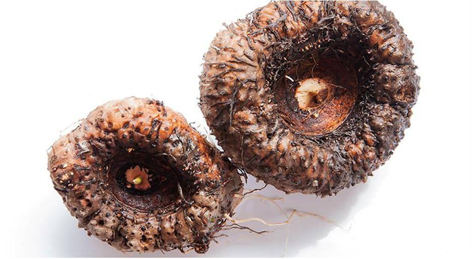 eponge-konjac-naturel-plante-racine-effet-peau-resserre-pores-dilatés