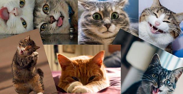 Астраханские радиостанции объявляют конкурс «Самый забавный кот» - Новости радио OnAir.ru