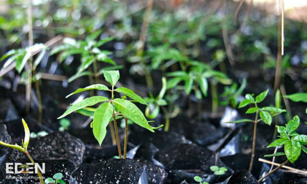 tree-seedlings