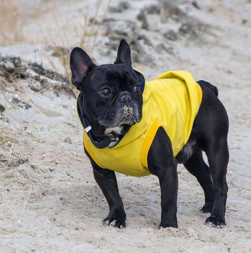 Hoodie & Pullover für Hunde