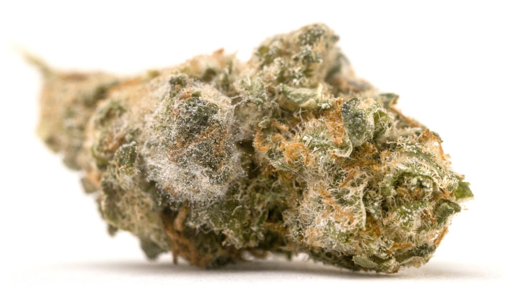 Mold on marijuana bud