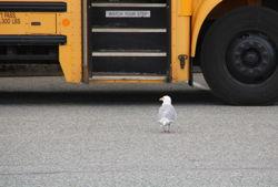 bus seagull pxb