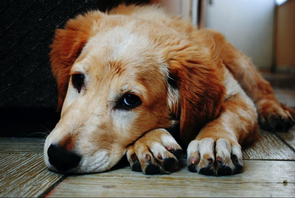Hund frisst Aluminiumfolie