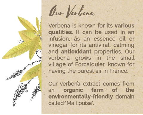 Our Verbena
