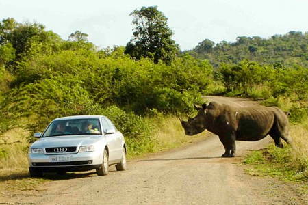 Nairobi National Park Safari Tour (4 seater Sedan)