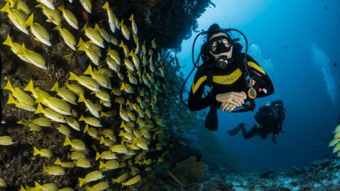 Diving on a Maldives tour
