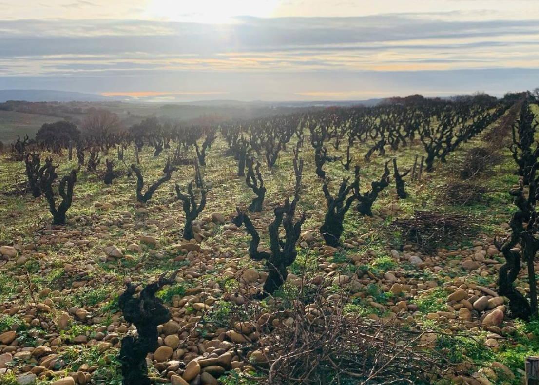 France, vin nature, rawwine, organic wine, vin bio, vin sans intrants, bistro brute, vin rouge, vin blanc, rouge, blanc, nature, vin propre, vigneron, vigneron indépendant, domaine bio, biodynamie, vigneron nature, cave vin naturel, cave vin, caviste, vin biodynamique, bistro brute, Quimper, Finistère , stéphane usseglio, domaine raymond usseglio, châteauneuf du pape, châteauneuf rouge