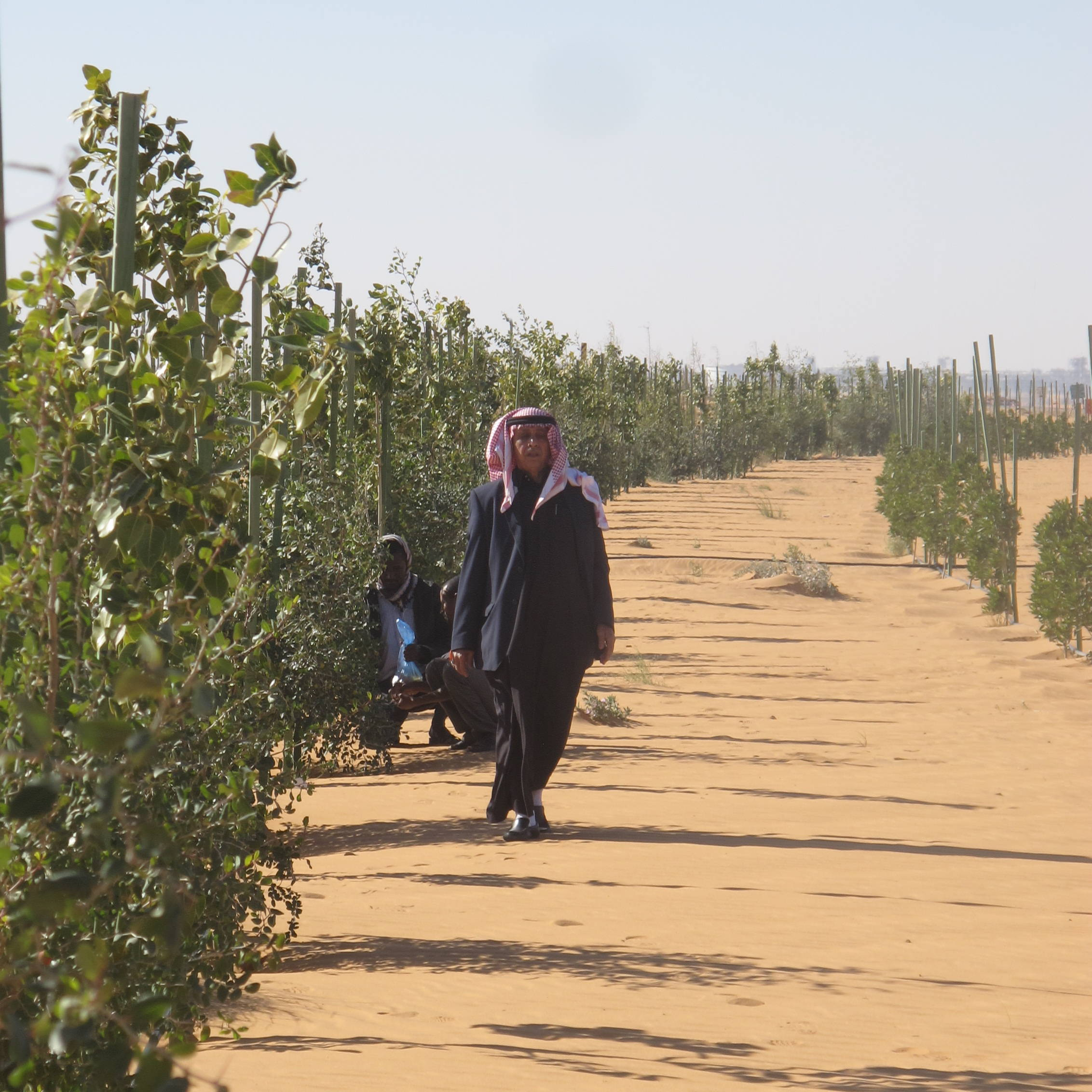 Ibrahim in the Khurais desert project with 4600 fruit trees.