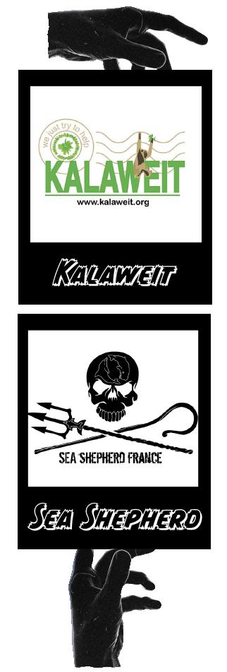 Une image comportant les Logo des associations Kalaweit et Sea Shepherd France. Ainsi qu'une main noir qui les tiens. Association défendue par Saïmiri-SB.