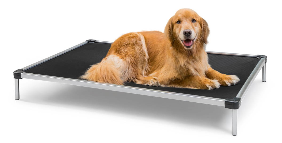 a golden retriever lying on a chew proof cot bed