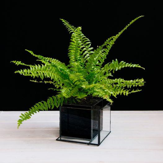 Стеклянное кашпо с растением BEIRA PAPA