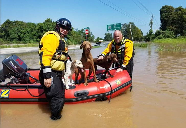 two flood rescue personnel save three dogs on a rubber raft
