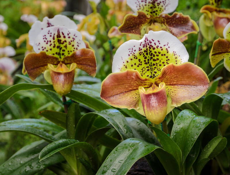 Top 5 Reasons Orchids Fail to Bloom – rePotme