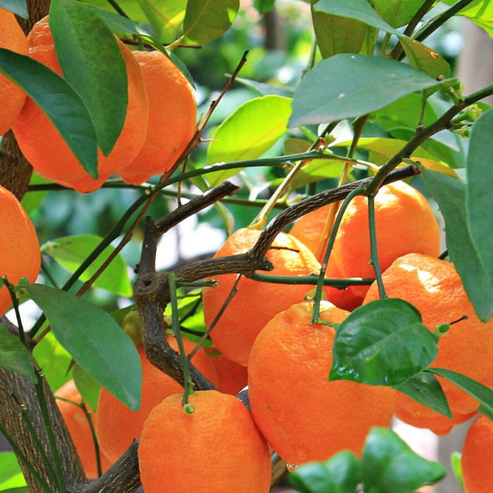 Natural skincare. Mandarin