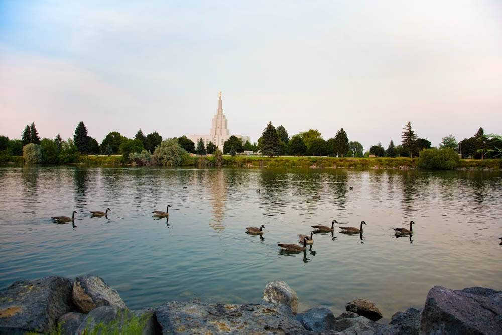 Photo of Idaho Falls with ducks floating across the River.