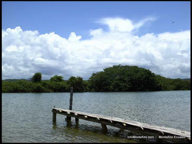 Foto del manglar en Manglaralto