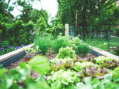 Urban gardening - Growing vegetables in your own city garden